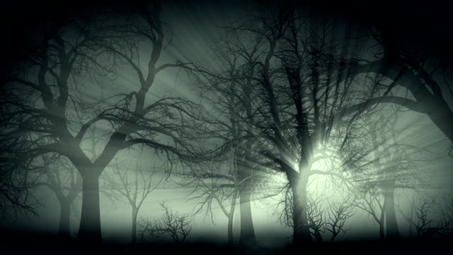 Dark forest in mist video