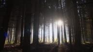 Dark forest video