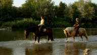 CLOSE UP: Dark horse and light mare walking in shallow river on beautiful day video