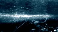 Dark river underwater shot video