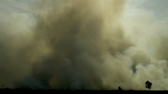 Dark smoke from forest fire in Sumatra Indonesia video