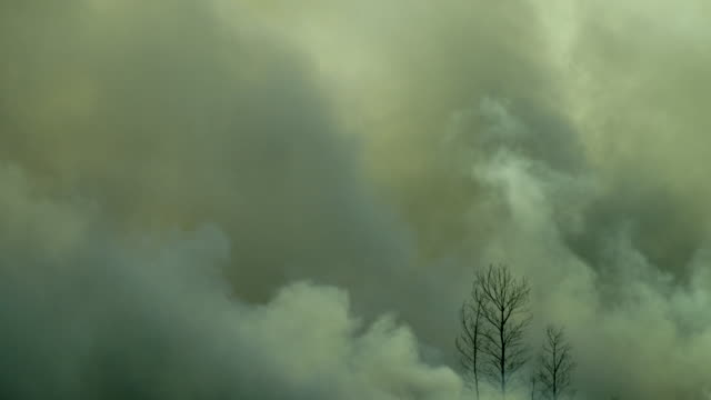 Dark smoke from the forest fire, Sumatra, Indonesia video