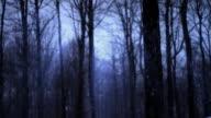 Dark winter forest Loop video