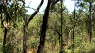 Darwin City Bushland video