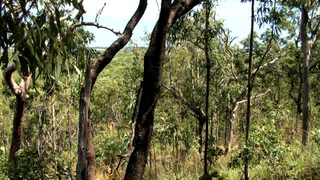 Darwin City Bushland video