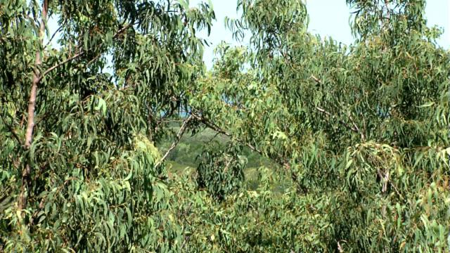 Darwin City Through Gum Trees 6 video