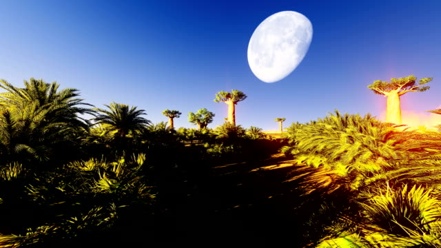 Date palms in oasis video