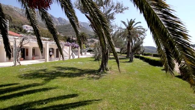 Date tree in Montenegro video