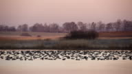 Dawn at the polder video