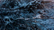 Dawn in the forest on a winter day. video