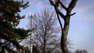 Daylight Establishing shot of Radio or Electrical Tower through trees video