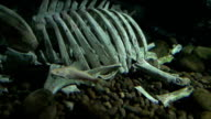 Dead animal video