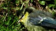 Dead bird video