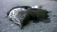 Dead bird. video