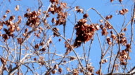 Dead Branches Blowing in the Wind video