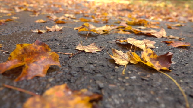 CLOSE UP: Dead fallen tree leaves laying on wet road after rain in late autumn video