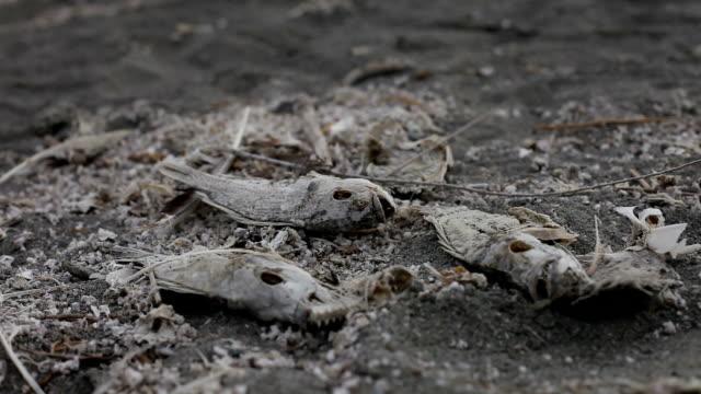 Dead Fish On The Shoreline video