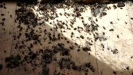 dead insects on the floor video