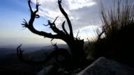 Dead juniper bush time lapse and Coachella Valley video