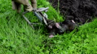 dead mole animal trap video