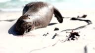 Dead Seal on the Beach video