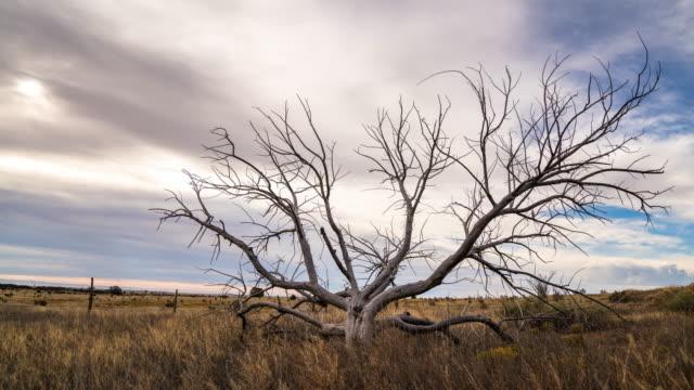 Dead tree alone in a field video