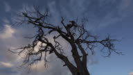 Dead Tree and Cloudscape in early Morning video