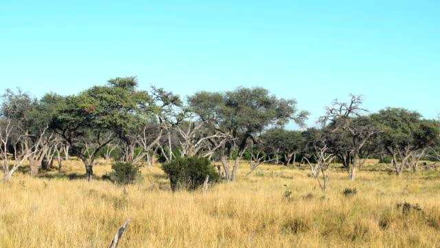Dead trees in bush video