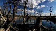 Dead trees (Salinity) video