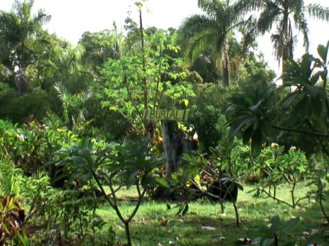 Death: Lush Tropical Cemetery, Zoom In video
