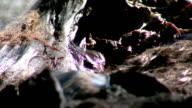 Decaying Flesh on Roadkill, Flies, Rotting Dead Animal video