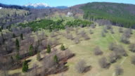 Deciduous and coniferous forest in early spring with alpine meadows and snowy peaks of the Ciucas Mountians , middle Carpathians range, Romania, aerial view video
