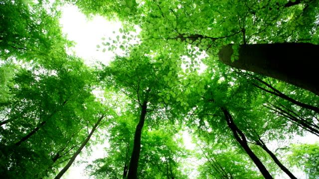 Deciduous Forest video