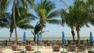 Deck chairs and coconut trees on the beach video