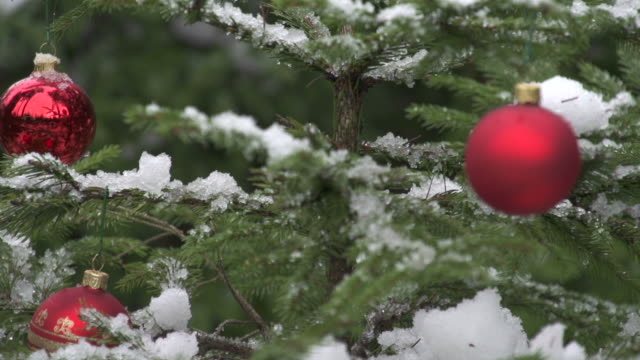 Decorated christmas tree in nature video