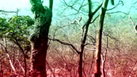 Deep Forest Elevated View video