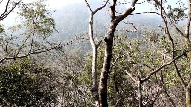 HD: Deep Forest video