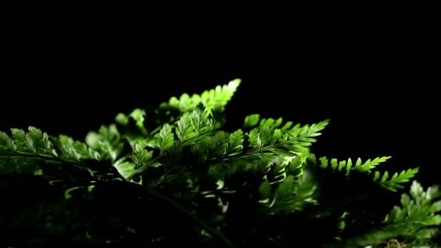 Deep green fern video