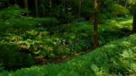 4K Deep Green Rain Forest and Ferns video