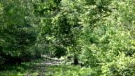 deer head silhouette in forest video