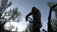 Deer Hunter Archery sunset video