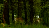Deer in Richmond Park, low angle view video