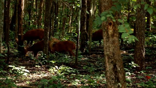 Deer in the park video