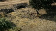 Deer in woods video