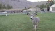 Deer Saying Hello video