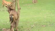 deers video