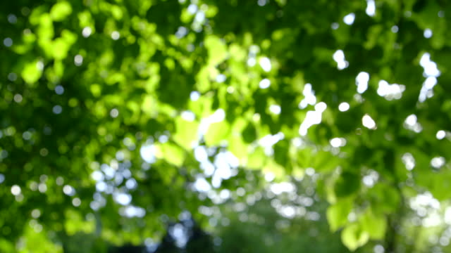 Defocused abstract fresh green Nature Background video