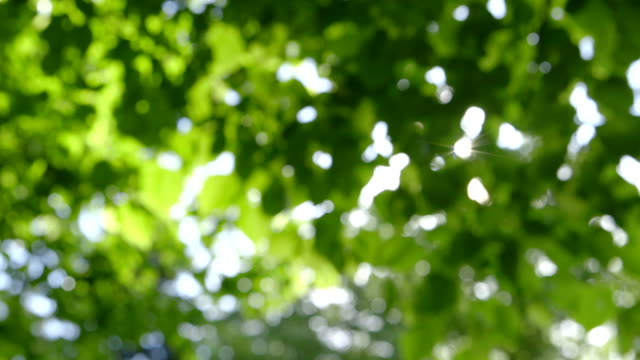 Defocused abstract green Nature Background with Sunbeams video