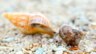 defocused: colorful and big Hermit crab and tiny crab video