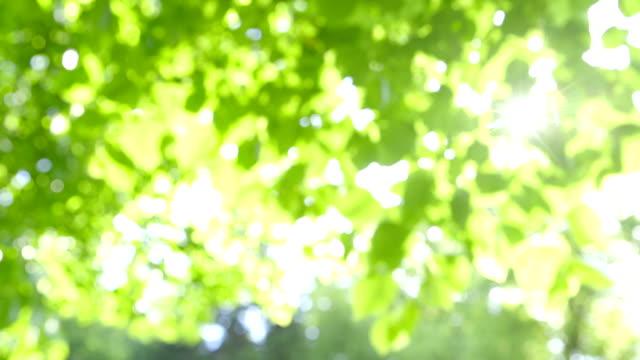 Defocused fresh green Leaves against the Sun with Sunbeams video